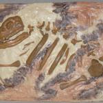"""""""Fossil Catadillo Porkimus"""""""